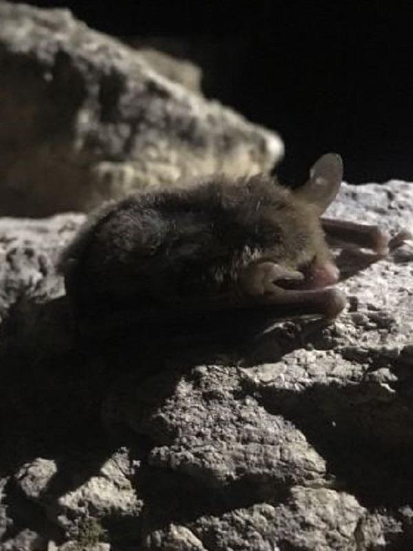 El Proyecto ENCEBRA, una apuesta por el estudio y conservación de los mamíferos en el sureste ibérico