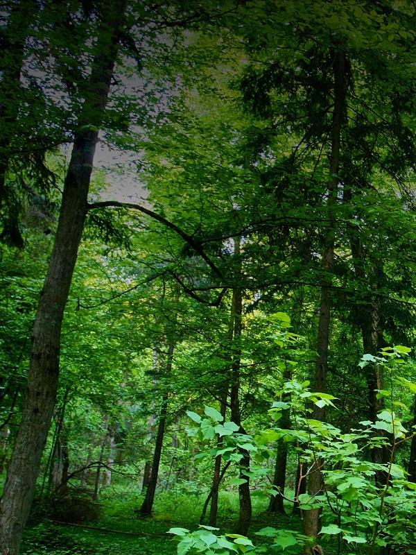 Conoce el proyecto que quiere integrar la gestión de la biodiversidad en la gestión forestal sostenible