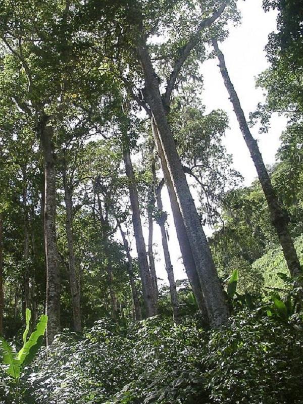 Equo exige al Gobierno: Protección del 30% del Planeta para 2030