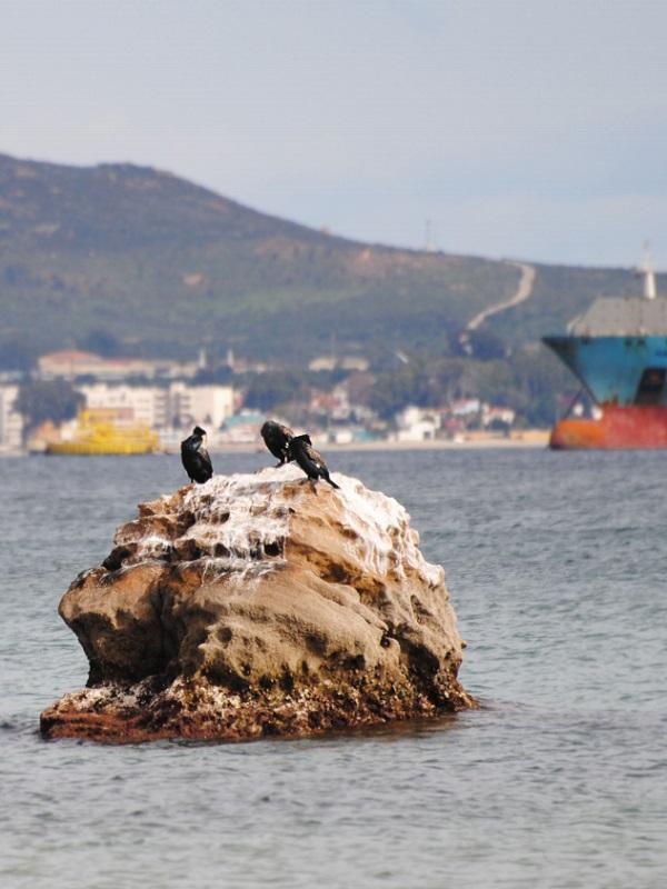 Ecologistas cifra en 10.000 millones de euros el impacto ambiental de la actividad portuaria en Algeciras (Cádiz)