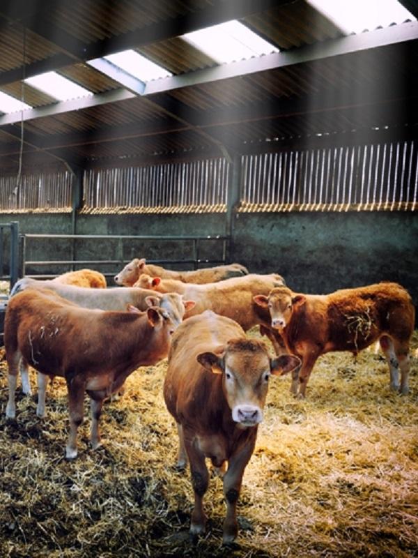Agricultura Ecológica 1 – Macrogranjas 0