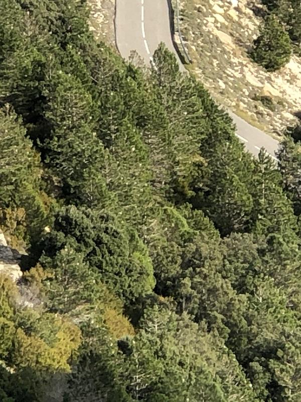 Los bosques de Cataluña se mantienen verdes a pesar de la gran cantidad de procesionaria