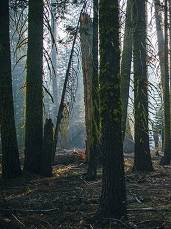 Fundación Universidad-Empresa diseña un concurso para salvaguardar el futuro de los bosques