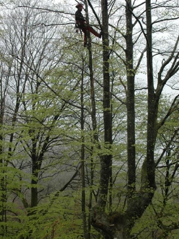 Navarra organiza una salida para conocer los árboles trasmochos de Leitza