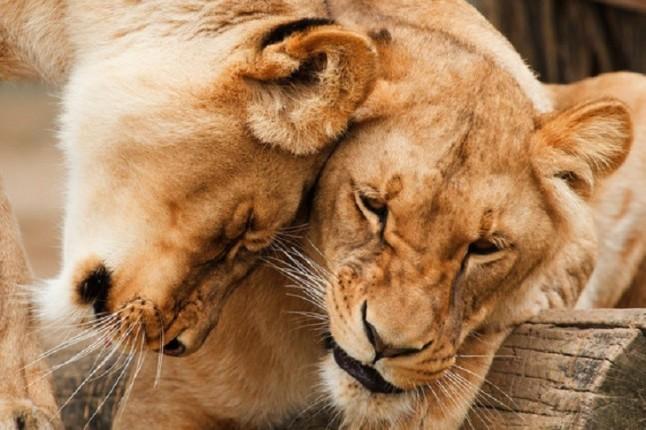 La lógica del amor de los animales