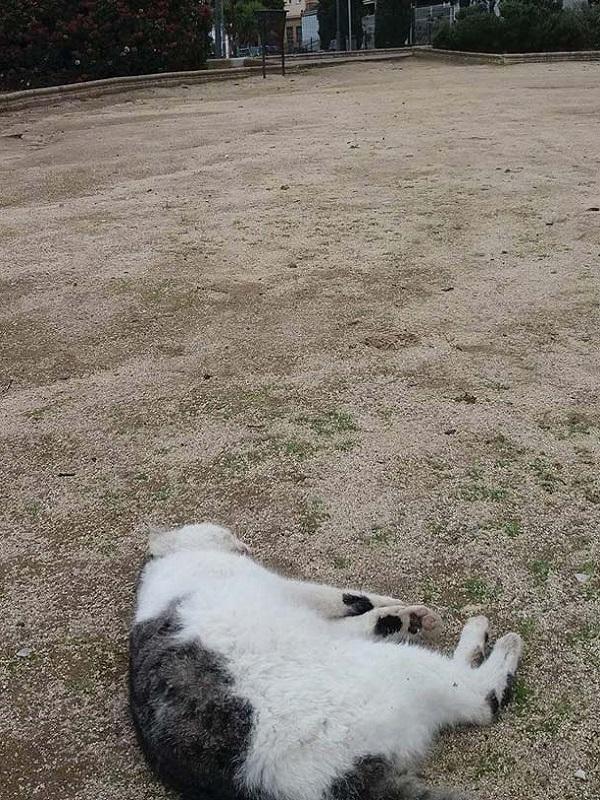 Pacma denuncia el envenenamiento de cinco gatos en Cabra (Córdoba)