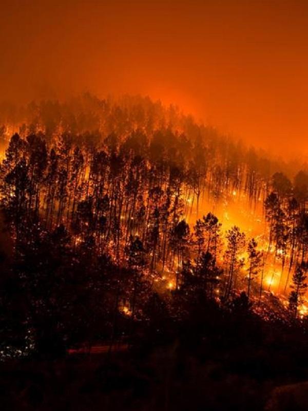 Analizando a fondo las causas de los incendios en invierno