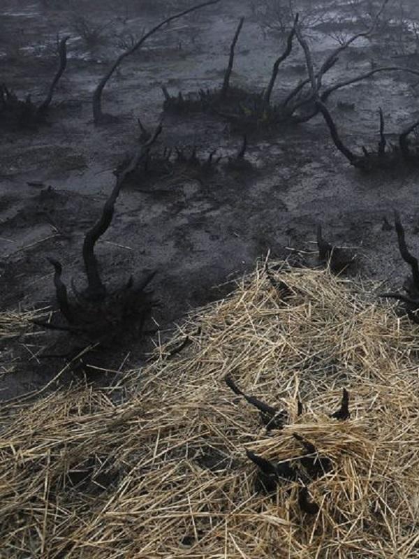 Pedimos a Europa que compruebe si se está subvencionando en Asturias las zonas quemadas
