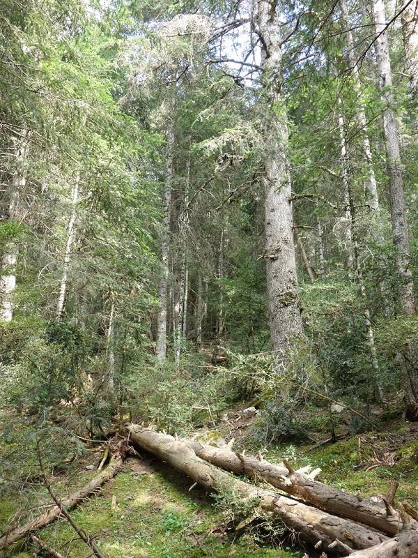 Iniciativa para recuperar el bosque atlántico gallego de Fragas do Mandeo