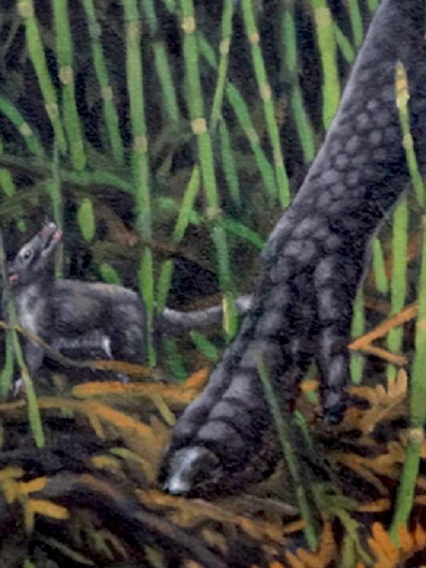 Un nuevo marsupial vivió en el Ártico con los dinosaurios