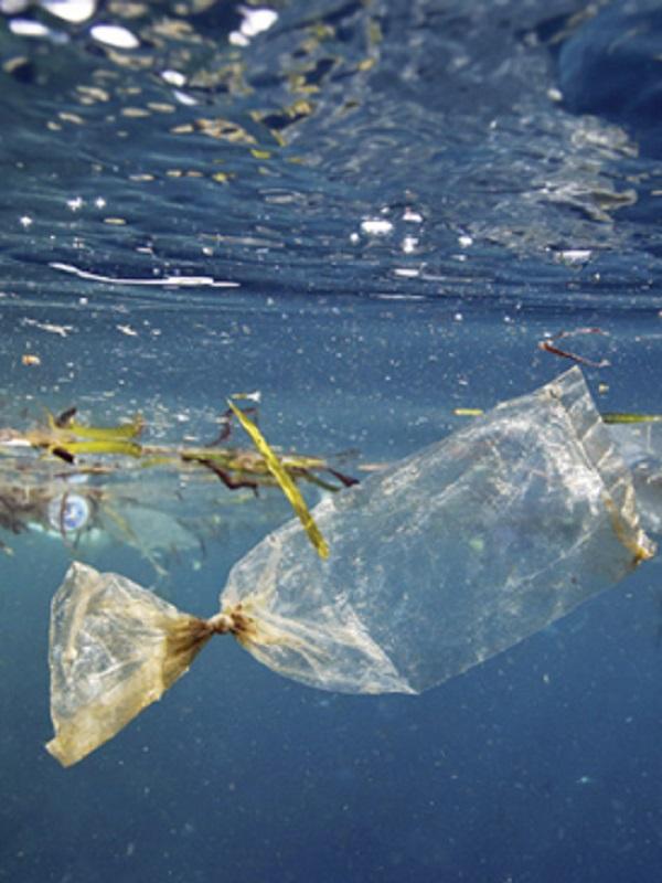 La basura marina en aguas nacionales al limite