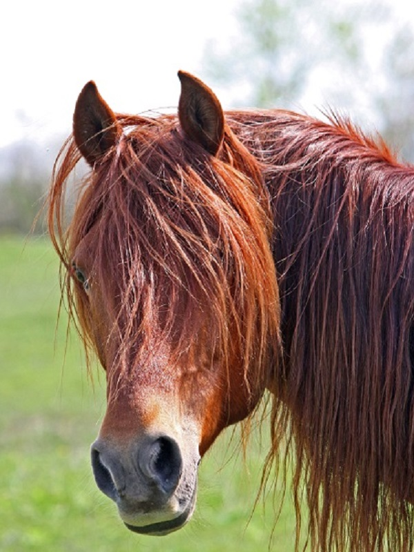 Esclerosis múltiple, la terapia con caballos es una gran idea
