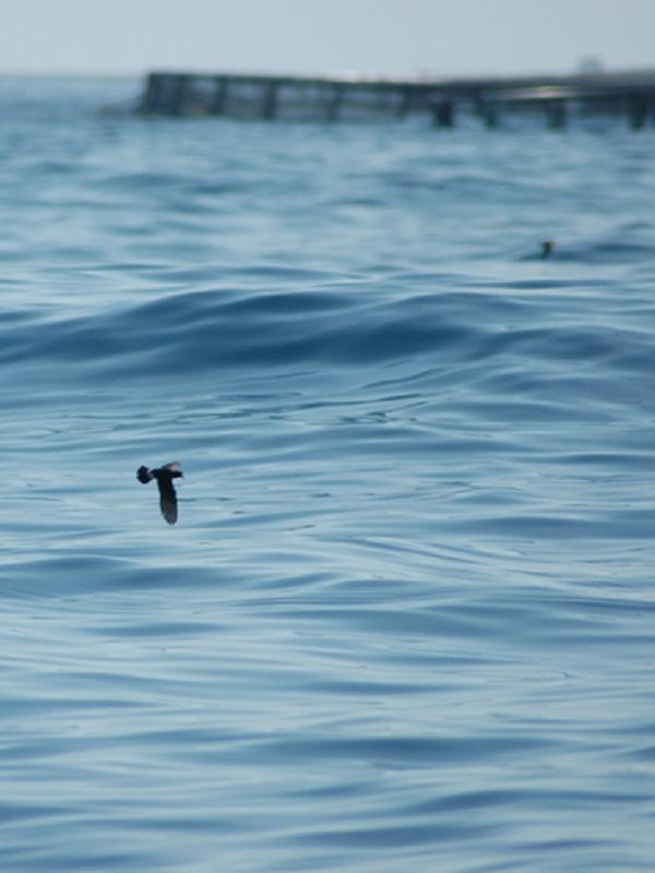 Se sientan las bases de la estrategia de gobernanza de la Red Natura 2000 marina