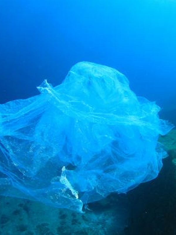 La Carta de Sostenibilidad de Cetáceos, finalista de los premios de la Organización Mundial del Turismo