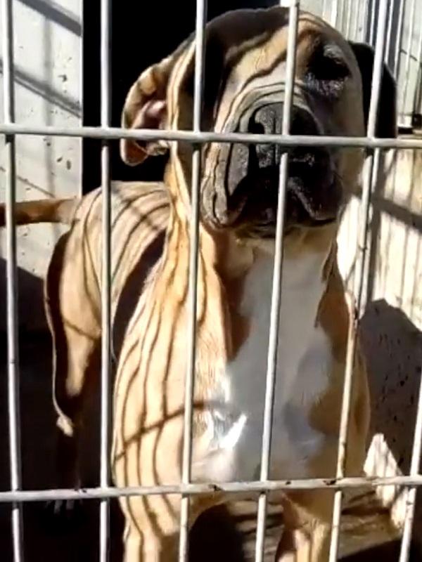 Centro de Protección Animal de Parla pasa siete días sin electricidad con cadáveres congelados y medicinas refrigerada