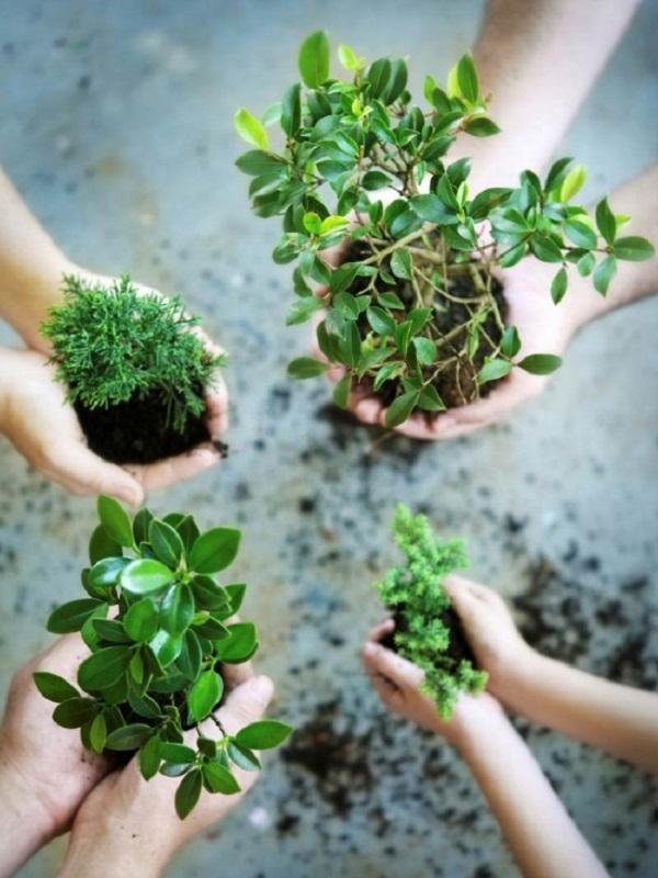 2019 debe ser el año para encarrilar una nueva década ecologista