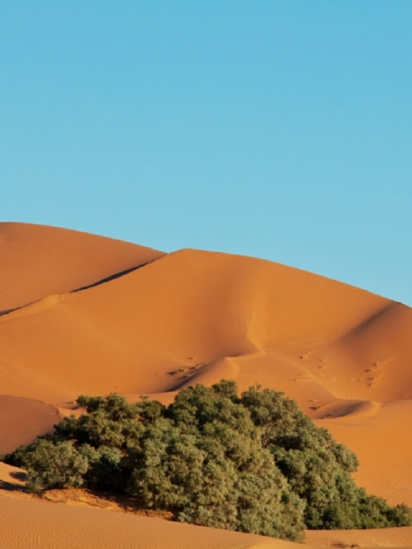 El Sáhara oscila entre clima seco y húmedo cada 20.000 años