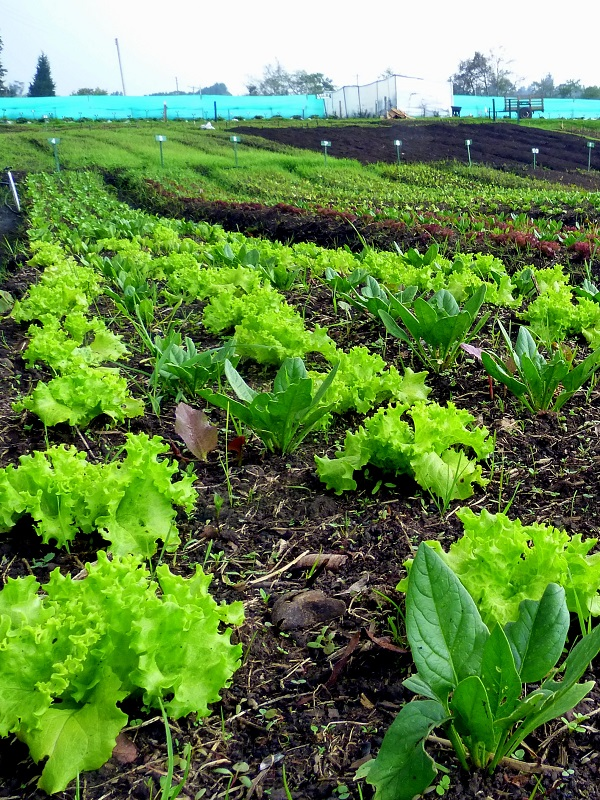 Zaragoza. Abierto el plazo de inscripción para inscribirse en el curso de Agricultura Ecológica