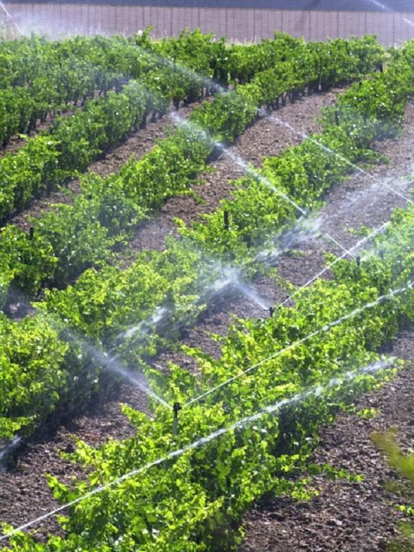 La sostenibilidad del Campo de Cartagena pasa por modernizar desalación, diversificar los cultivos y optimizar el riego