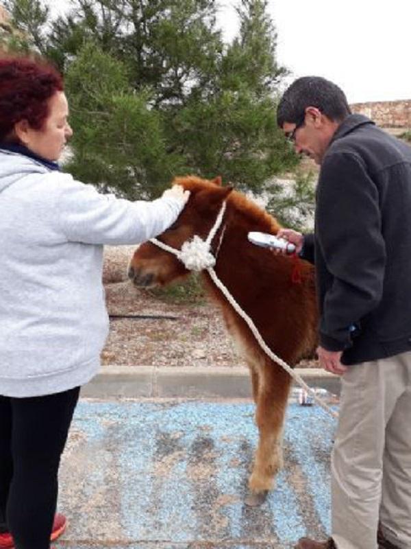 Abandonan un poni de 6 meses en Lorca