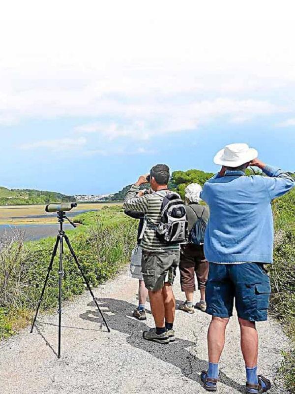 Baleares promociona el turismo ornitológico en Mallorca con una guía de aves urbanas