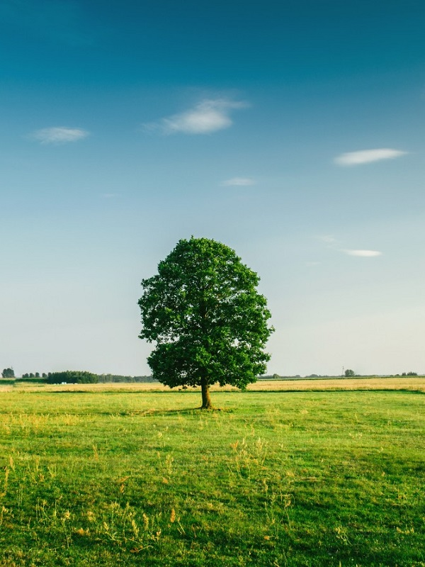 Oviedo abre el trámite de consulta pública para renovar la ordenanza de medio ambiente