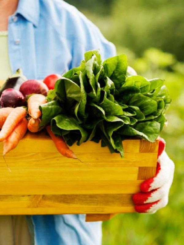 Creación de empleo con la alimentación ecológica
