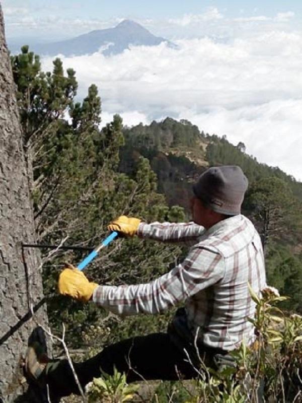 Dendrocronología, la historia que guardan los árboles
