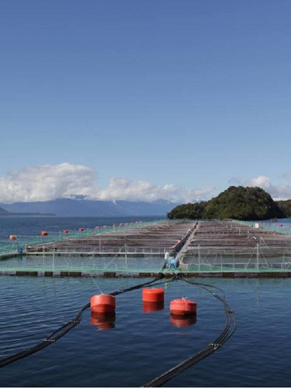 Con nueva campaña Oceana advierte sobre los potenciales riesgos de la salmonicultura en la salud de las personas