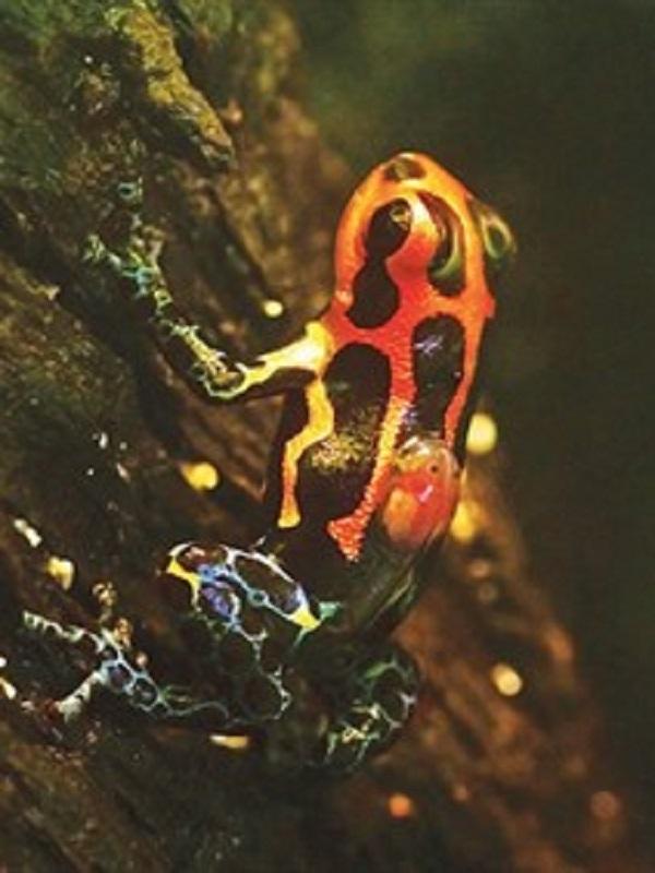 La evolución usa la misma fórmula para hacer animales monógamos