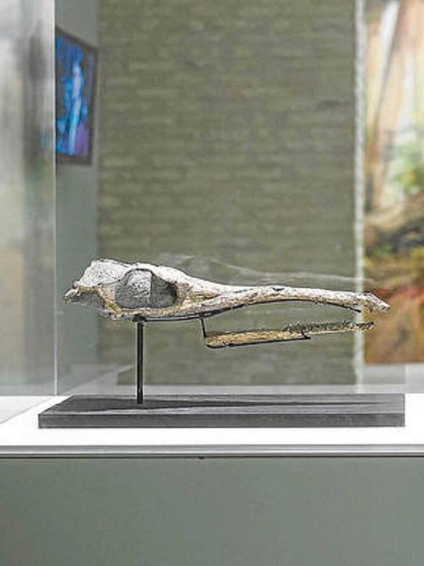 Un escáner médico desvela misterios de un reptil marino prehistórico