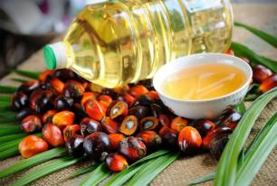 Industria del aceite de palma, la 'Cosa Nostra'