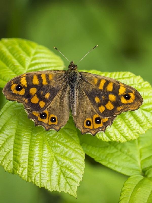 Madrid albergará una de las colecciones más importantes de escarabajos y mariposas de país