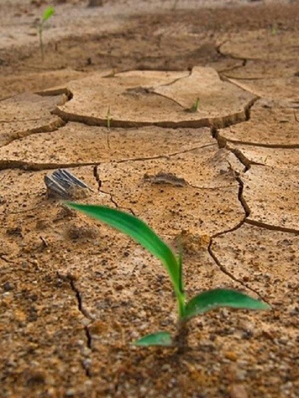 Lideresas por el Clima proponen convertir la Crisis Climática en Oportunidad de Transformación Económica