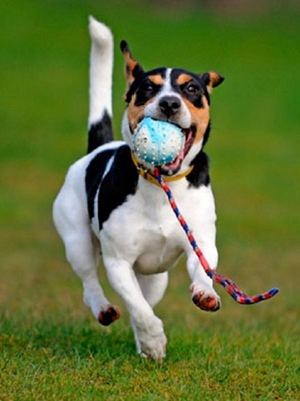 La Policía Local de Málaga denuncia en 2018 a 554 propietarios de perros por no inscribir su perfil de ADN