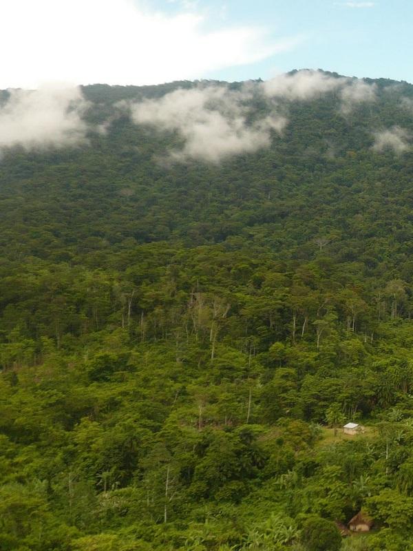Termitas, las aliadas de las selvas tropicales ante la sequía