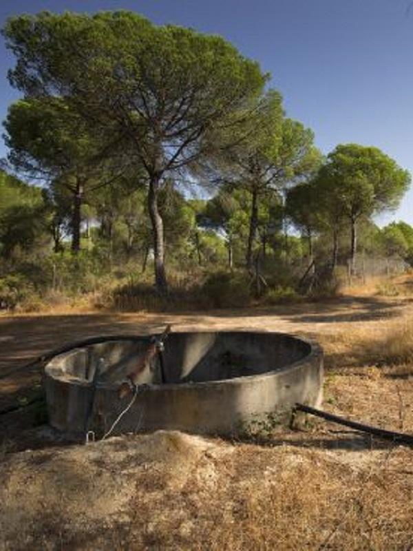 EQUO reclama celeridad en la clausura de pozos ilegales en Doñana