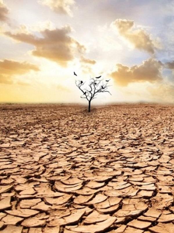 Organizaciones satisfechas con el 49% en cambio climático