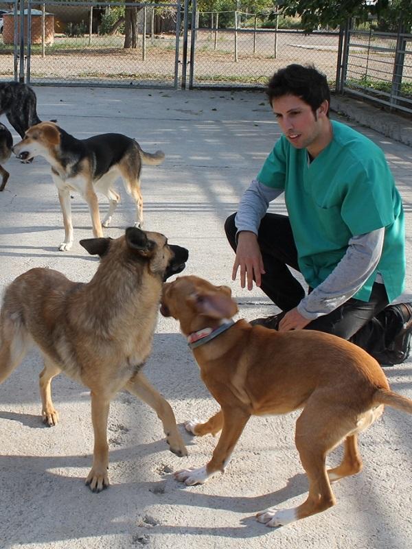El centro de protección animal de la Diputación de Zaragoza atiende a 269 perros en 2018