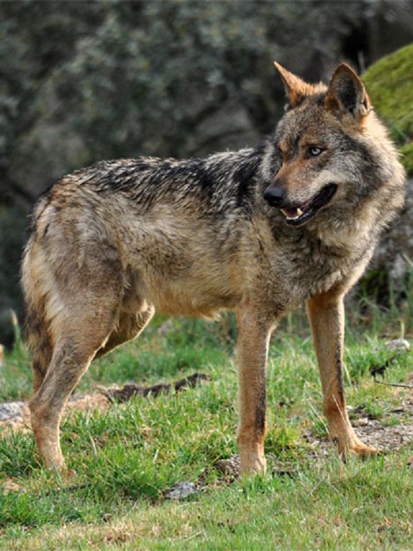 EQUO reivindica más políticas para la protección de los animales