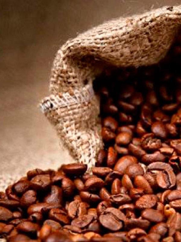 Más del 60 por ciento de variedades de café, en peligro de extinción