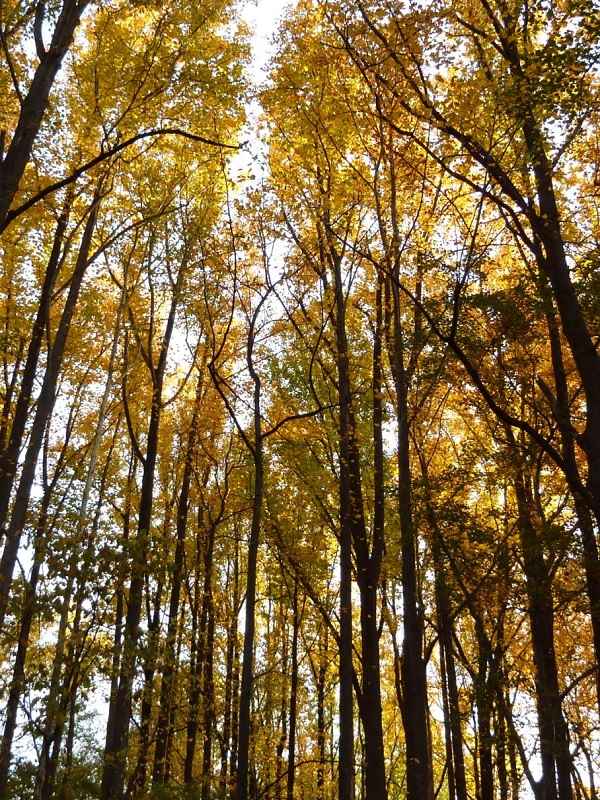 No te puedes perder la nueva guía para mejorar la toma de decisiones sobre biodiversidad