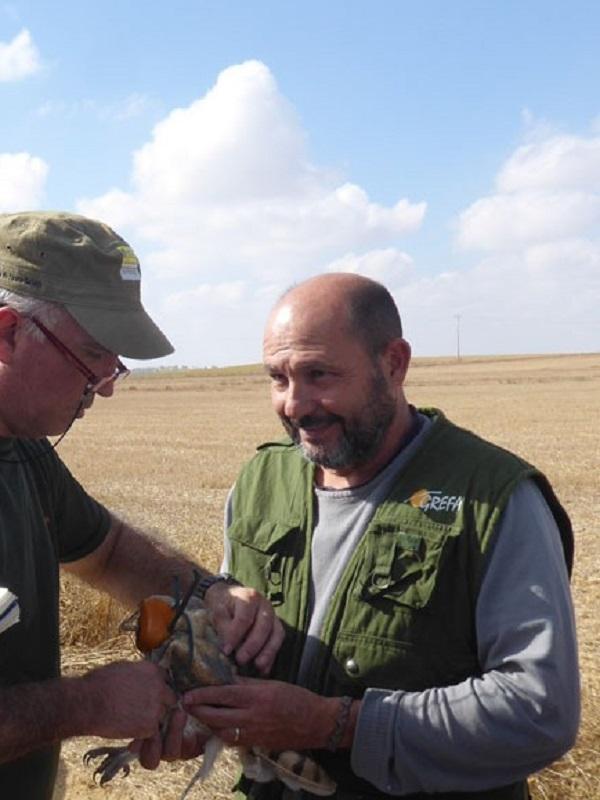 GREFA inicia el seguimiento de la lechuza común en zonas agrícolas de Castilla y León