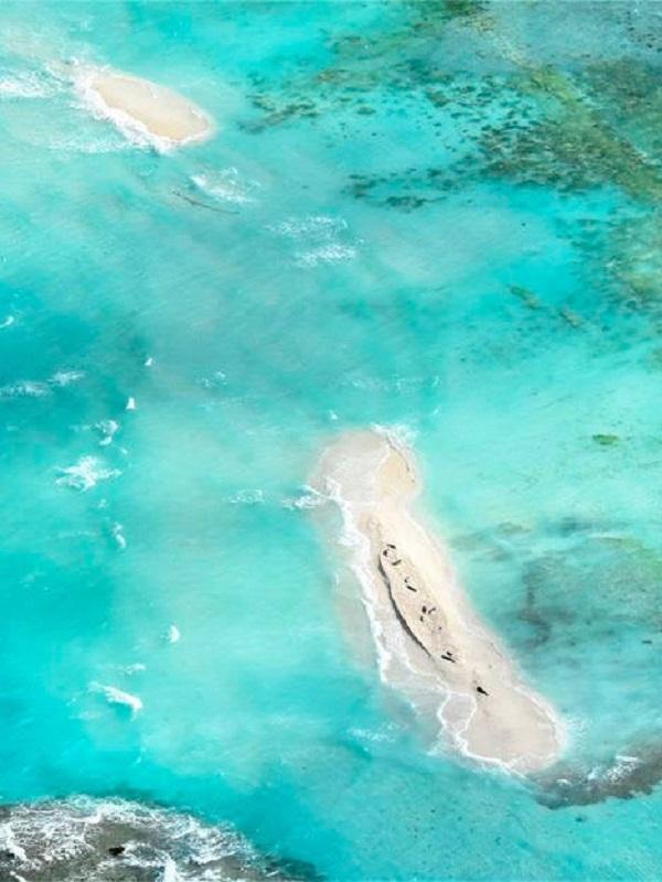 El cambio climático se lleva por delante una isla que formaba parte del French Frigate Shoals