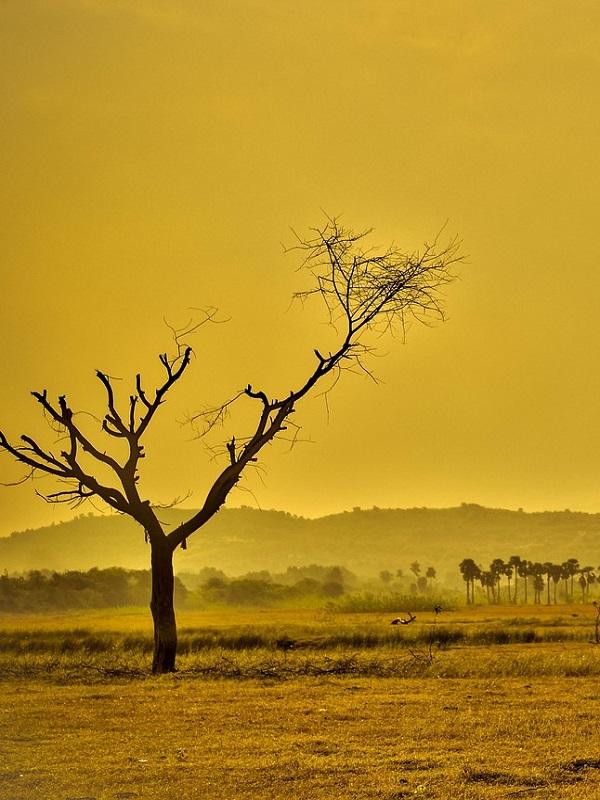 El agua, talón de Aquiles de los bosques ante el cambio climático