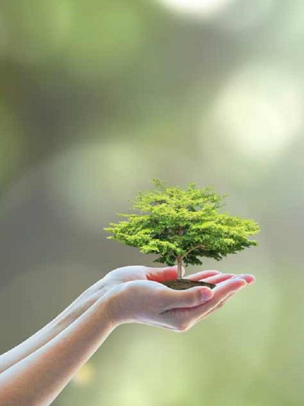Madrid celebra el Día Mundial de la Educación Ambiental