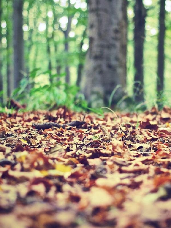 Innovación para analizar los cambios locales en los bosques y el suelo