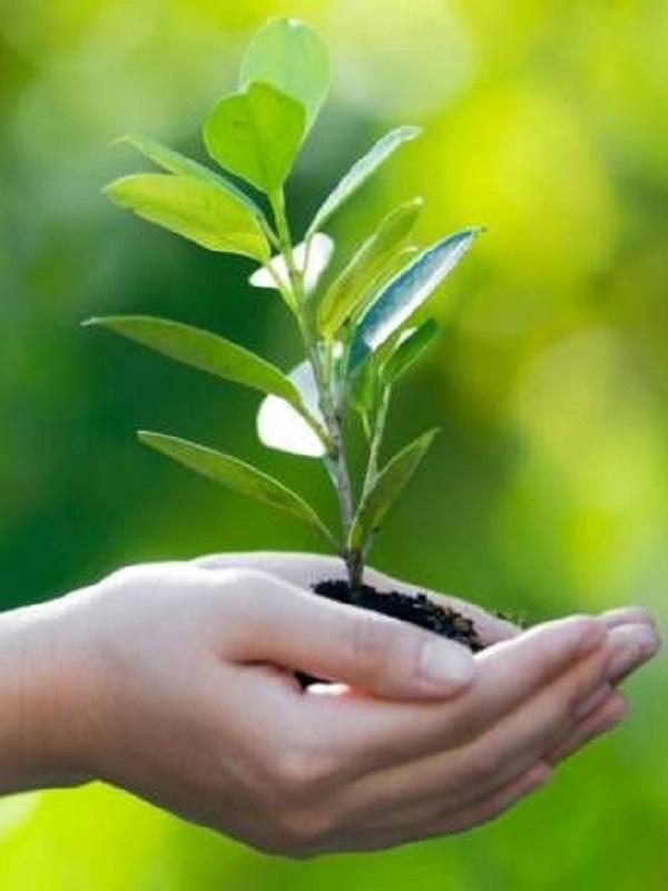 Cien propuestas medioambientales para el nuevo Gobierno andaluz