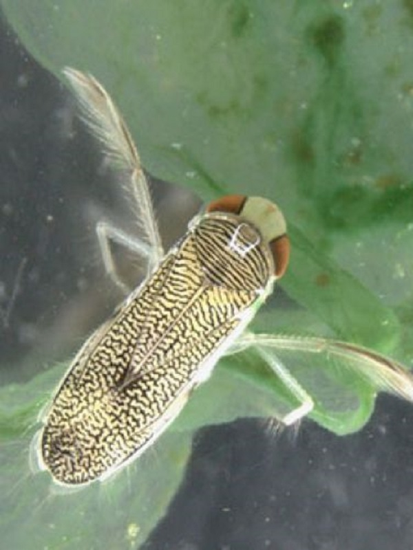 La salinidad merma la cantidad de insectos acuáticos en Doñana