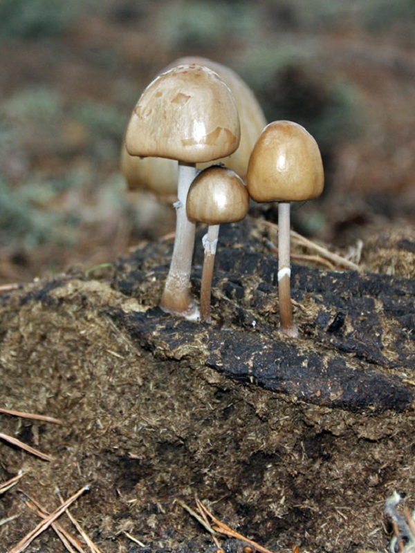 Un compuesto de varios hongos del suelo demuestra propiedades antitumorales y antibacterianas